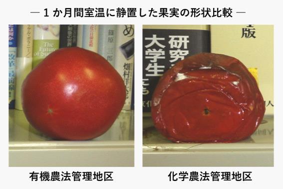 トマトの比較